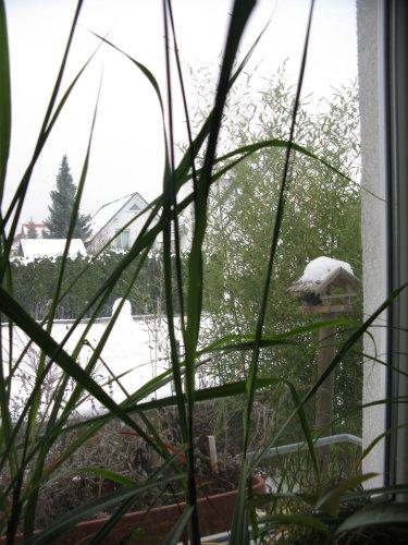 KuechenfensterJanuar2010.jpg