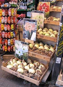 Amsterdam2010Blumenmarkt.jpg