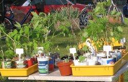 Pflanzenflohmarkt2012.jpg