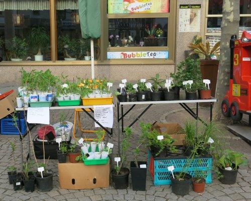 PflanzenflohmarktGrossGerau2013.jpg