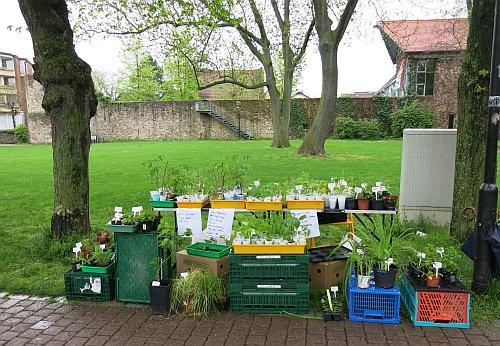PflanzenflohmarktReinheim2013.jpg