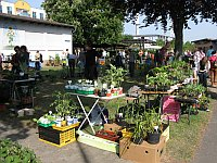 PflanzenflohmarktRuesselsheim_Mai2011.jpg