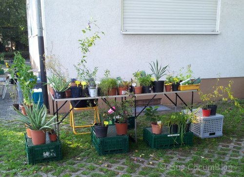 PflanzenflohmarktRuesselsheim_Okt2015.jpg