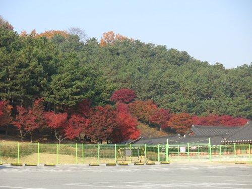 SuwonHerbstbaume.jpg