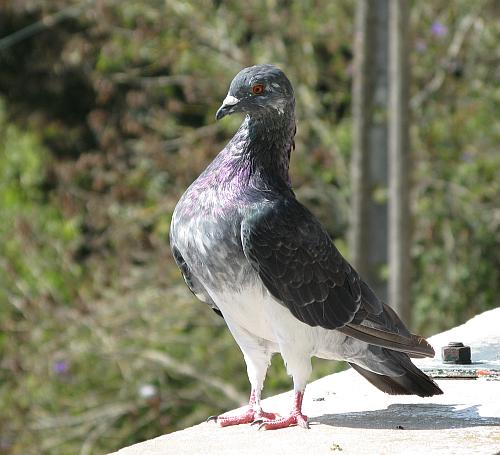 TaubePortugal2008.jpg