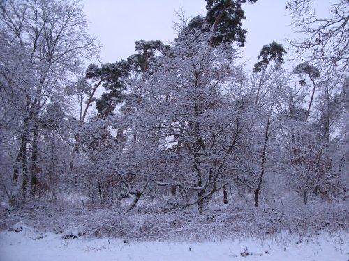 Winter2013_Wald.jpg