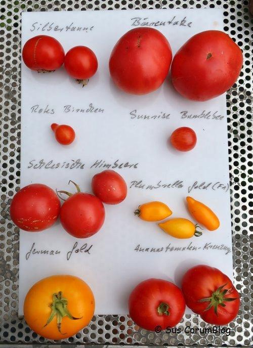 Tomaten2019_2.jpg