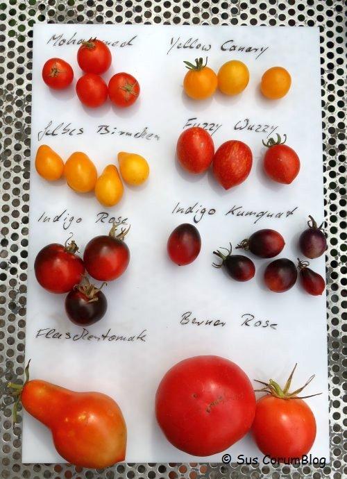 Tomaten2019_3.jpg
