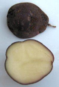KartoffelOdenwaelderInnen.jpg