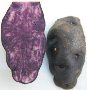 KartoffelVitelotteInnen.jpg