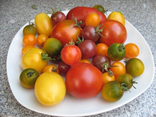 Tomaten2012.jpg