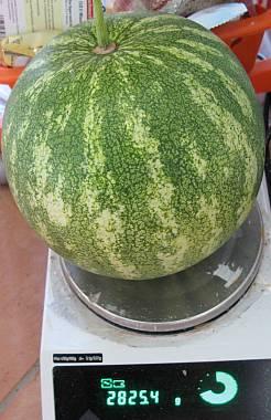 WassermeloneAufWaage2008.jpg
