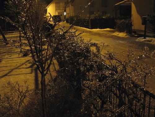 Winter2013_VereisteZierkirsche.jpg