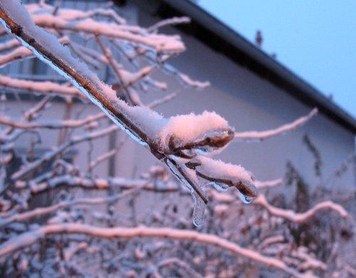 Winter2013_VereisterUndVerschneiterBusch.jpg