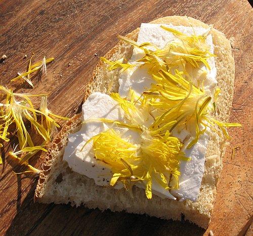LoewenzahnAufZiegenfrischkaese.jpg